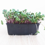 China Rose Microgreens 250gr