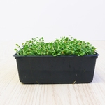 Red Clover Microgreens 250gr