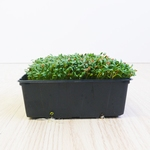 Tuinkers Microgreens 250gr